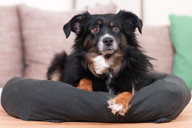 8 DIY-Ideen für dein Haustier