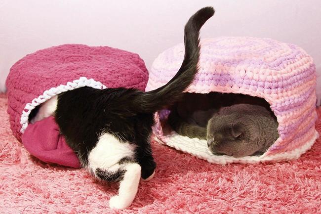 8 Diy Ideen Für Dein Haustier