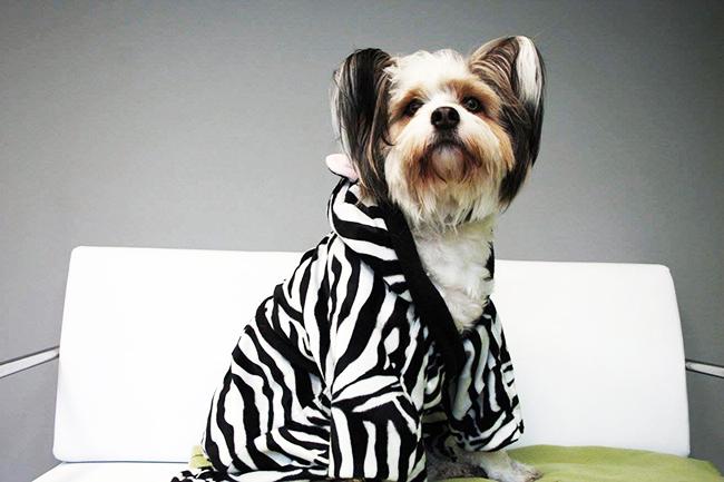 8 diy ideen für dein haustier hunde bademantel
